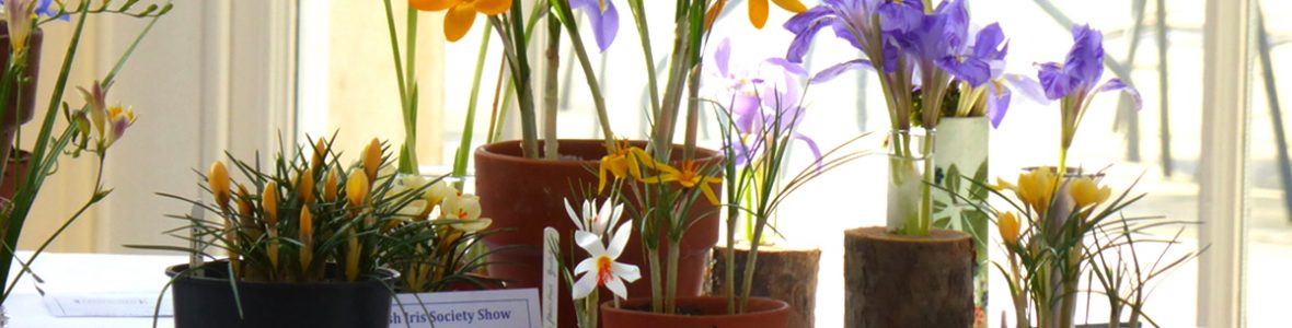 Early Spring Show, Pembroke Lodge